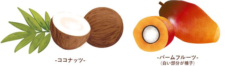 ココナッツとパームフルーツの図