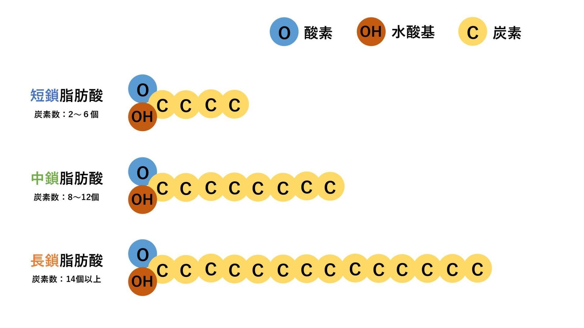 脂肪酸の炭素数の比較画像